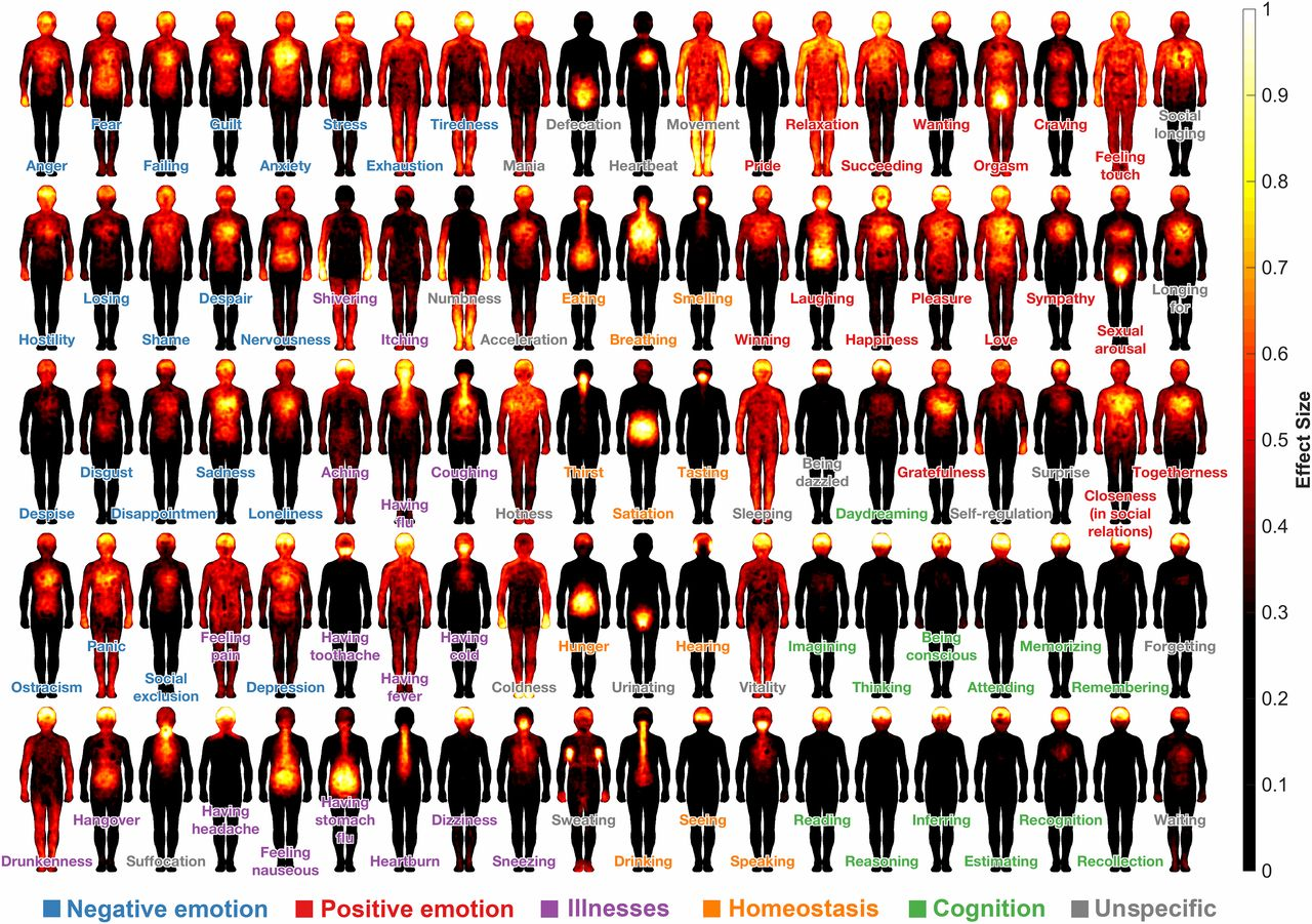 A cartography of consciousness – researchers map where