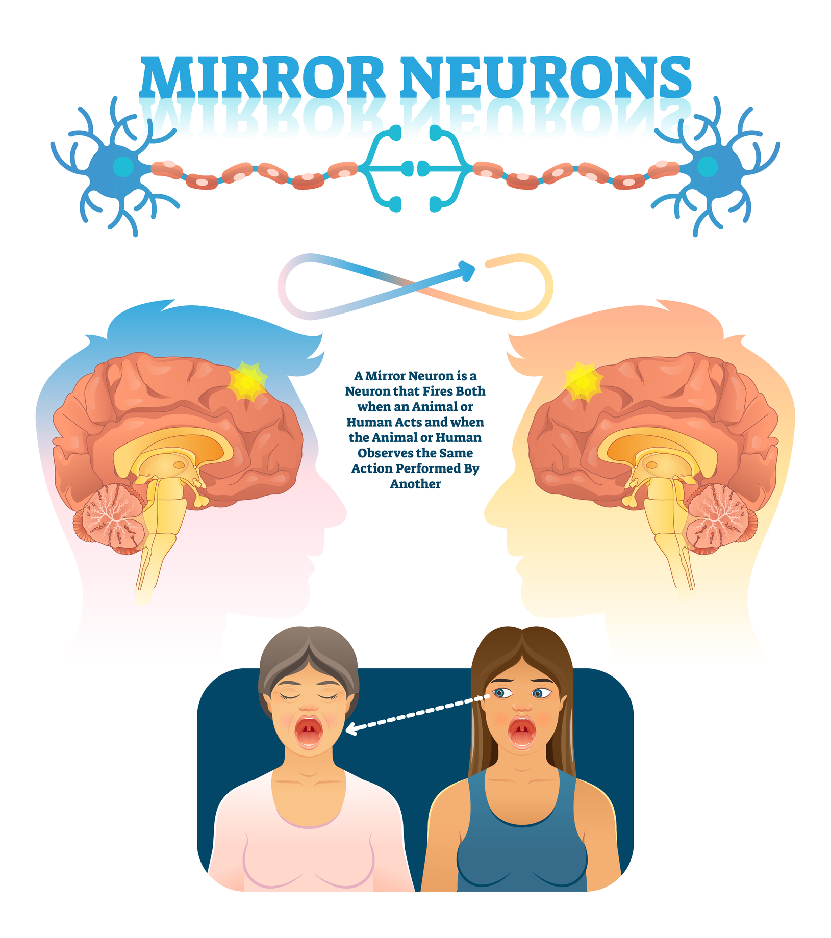 There Is Only Weak Evidence That Mirror Neurons Underlie Human Empathy – New Review And Meta-Analysis